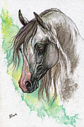 Horse Drawing Prints - Piber polish arabian horse watercolor painting Print by Angel  Tarantella