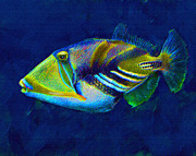 Hawaiian Fish Digital Art Prints - Picasso Triggerfish Print by Jane Schnetlage
