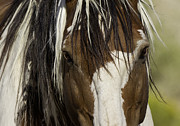 Wild Horse Prints - Picassos Eyes Print by Carol Walker