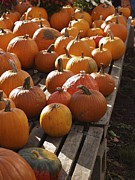 Pumpkins Originals - Pick Your Pumpkin by Patricia McKay