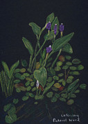 Pickerel Posters - Pickerel Weed Poster by Linda Feinberg
