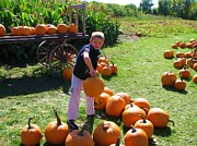 Victoria Sheldon - Picking the Best Pumpkin