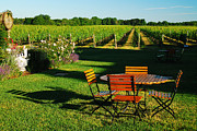 Images Of Wine Prints - Picnic in the Vineyard Print by James Kirkikis