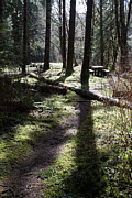John Daly - Picnic Pathway