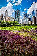 Illinois Flower Prints - Picture of Chicago Skyline with Lurie Garden Flowers Print by Paul Velgos