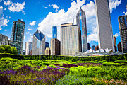 Millennium Park Prints - Picture of Lurie Garden Flowers with Chicago Skyline Print by Paul Velgos