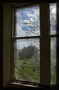 Liz  Alderdice - Picture Window