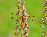 Yellow Dragonfly Posters - Picturesque Painted Poster by Al Powell Photography USA