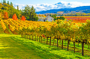 Sonoma County Vineyards. Prints - Picturesque Sonoma County Vineyards Print by Tirza Roring