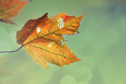 Autumn Metal Prints - Pieces of Me Metal Print by Amy Tyler