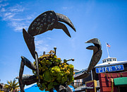 San Francisco Giant Photos - Pier 39 Crab San Francisco by SFPhotoStore