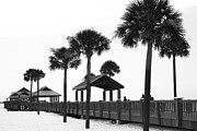 Clearwater Beach Framed Prints - Pier 60 in monochrome Framed Print by Georgia Fowler