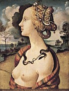 Portrait Of Woman Photo Framed Prints - Piero Di Cosimo, Pietro Di Lorenzo Framed Print by Everett