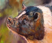 Wildlife Art Prints Prints - Pig Print by David Stribbling