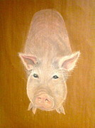 Pig Pastels Framed Prints - Pig Framed Print by Jo Snyder