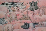 Pigs Framed Prints - Pig Spread Framed Print by Ditz