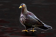 James Ahn - Pigeon 3496 - F