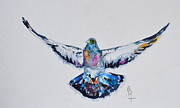 Project Painting Prints - Pigeon In Flight Print by Beverley Harper Tinsley