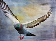 Deborah Benoit Posters - Pigeon On Wing Poster by Deborah Benoit