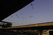 Train On Bridge Prints - Pigeons flying over the Jodhpur train station Print by Ashish Agarwal