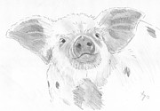 Pig Art - Piglet   by Mike Jory