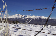 Barbed Wire Fences Prints - Pikes Peak Through the Fence Print by Carol Milisen