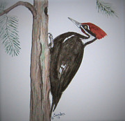 Sandra Maddox - Pilated Woodpecker