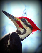 Crystal Joy Photography - Pileated Close Up