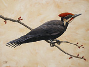 Birds Painting Posters - Pileated Woodpecker Poster by Crista Forest