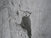 Black Top Drawings Posters - Pileated Woodpecker Poster by Elaine Munro
