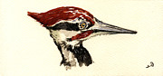 Nature Study Painting Posters - Pileated woodpecker head study Poster by Juan  Bosco