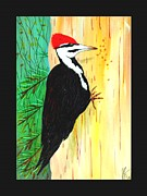 Jim Harris - Pileated Woodpecker