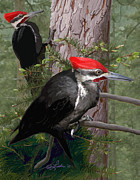 Pileated Woodpeckers Prints - Pileated Woodpeckers Print by Pam Little