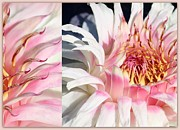 Pink Florals Prints - Pillowed in Pink Print by Carol Groenen