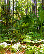 Palmetto Plants Photos - Pine and Palmetto Woods Filtered by Duane McCullough