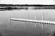Pine Barrens Dock Print by John Rizzuto