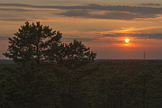 Terry DeLuco - Pine Barrens Sunset NJ
