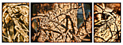 Nature Study Framed Prints - Pine Branch Study in Three Framed Print by Lincoln Rogers