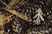 Pine Metal Prints - Pine Cones and Maple Leaf Metal Print by Andrew Soundarajan