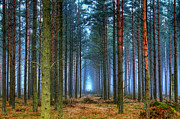Pine Forest In Morning Fog Print by EXparte SE