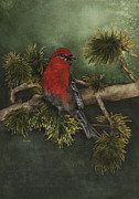 Nan Wright - Pine Grossbeak