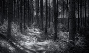 Monochrome Art - Pine Grove by Scott Norris
