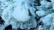 Gail Matthews - Pine Needles Dipped in Ice