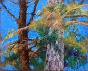 Pine Needles Pastels Framed Prints - Pine Needles Framed Print by Kathleen R Worgul