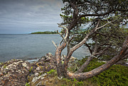 Randall Nyhof - Pine on the shore by the Eagle Harbor Lighthouse