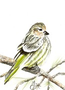 Bird Prints Paintings - Pine Siskin Finch by Elisa Gabrielli