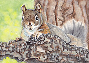 Heather Stinnett - Pine Squirrel