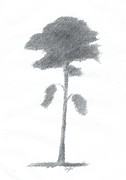 Alan Daysh - Pine Tree Drawing Number...