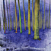 Mary Clanahan - Pine Tree Forest Winter...