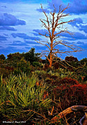 Saw Palmetto Prints - Pine Tree Print by Kathleen J Daniel